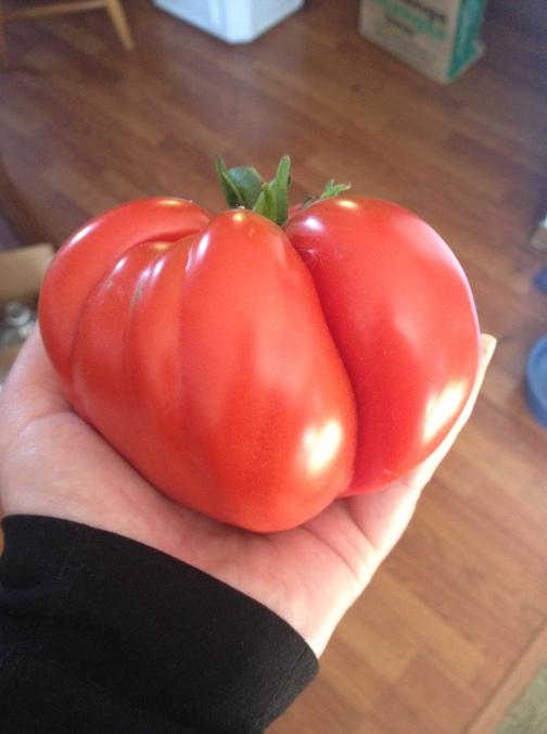 Dorothy Tomato